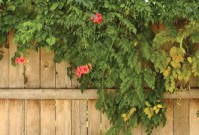 Tips for Putting In Your Brand New Fence image